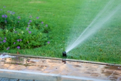 Automatic sprinklers watering grass